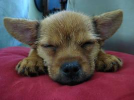Jada Puppy Pillow by MrAbby