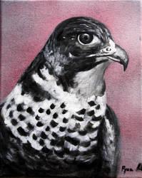 Hawk by jahshalom