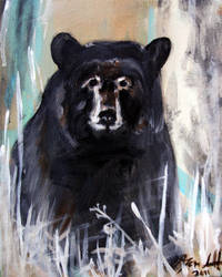 bear by jahshalom