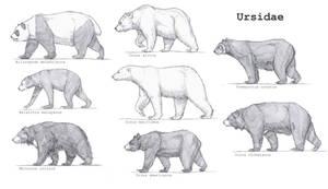 Ursidae by Gredinia