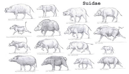 Suidae by Gredinia
