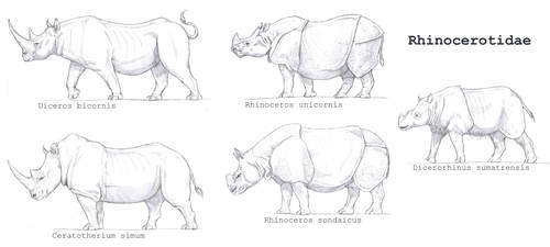 Rhinocerotidae by Gredinia