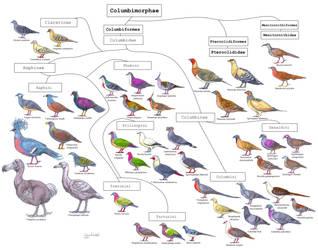 Bird cladistic : Columbimorphae diversity by Gredinia
