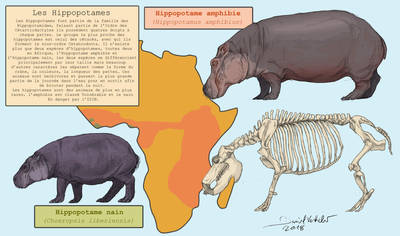 Whippomorpha 5 : Hippopotamidae by Gredinia