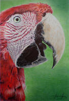 Ballpoint - MACAW by andre-assis