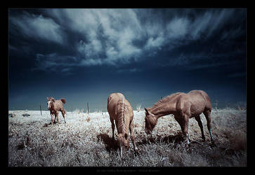In the Infra Red meadow by gilad