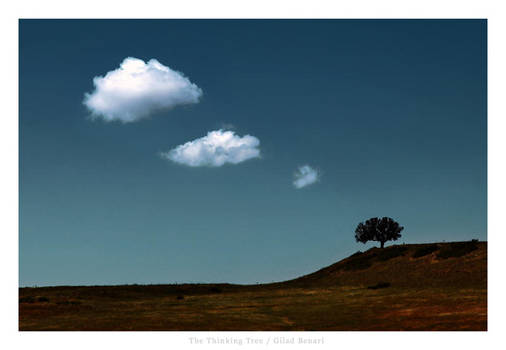 The Thinking Tree by gilad