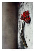 My Dying Love by gilad