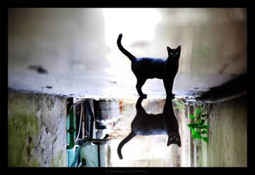El Gato Negro by gilad