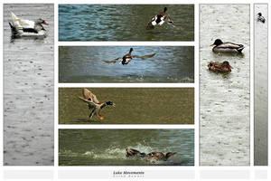 Lake Movements by gilad