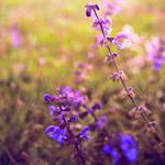 Spring field by Leo-SA