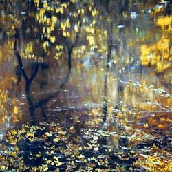 Autumn etude by Leo-SA