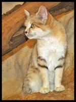 Wild Cat 1 by DeadlyDonna