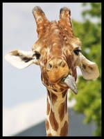 Giraffe 4 by DeadlyDonna