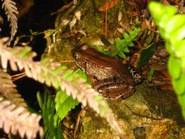Frog ready to leap by jar-of-urine