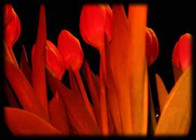 31. Flowers by quazo