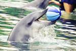 Dolphin_2795 by SkyeMarree