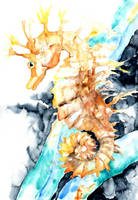 Dreaming Of A Seahorse by BarbaraPommerenke