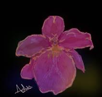 Pink orchid by Adutelluma