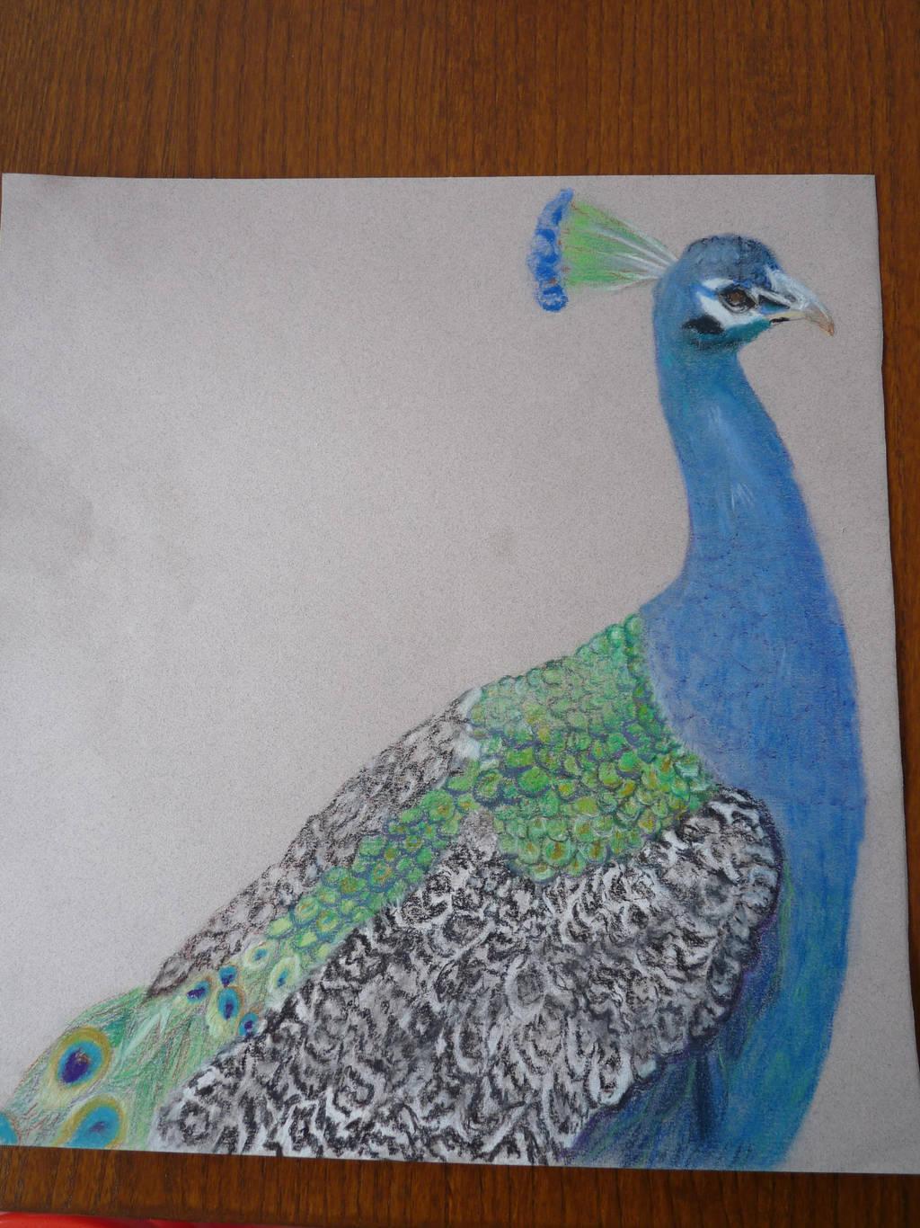 Peacock. by Adutelluma