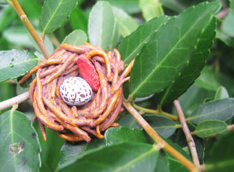 Nest Egg by VinrAlfakyn25