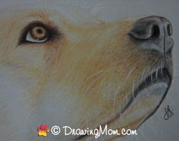 Drawing of Rudy by DrawingMom