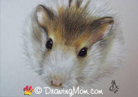 Drawing of Bubba the Hamster by DrawingMom