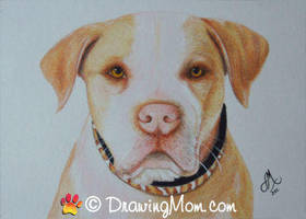 Drawing of Hercules from Pit Boss by DrawingMom