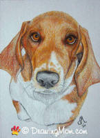 Drawing of Fred by DrawingMom