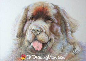 Drawing of Leroy by DrawingMom