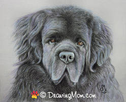 Drawing Remington by DrawingMom