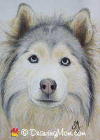 Drawing of Gibson by DrawingMom