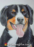 Drawing of Alfie by DrawingMom