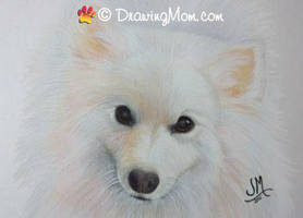 Drawing of Yo Yo Ma by DrawingMom