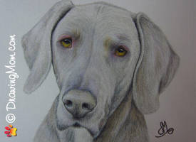 Drawing of Goose by DrawingMom