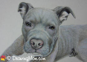 Drawing of Cesar by DrawingMom