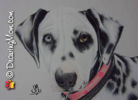 Drawing of Skye by DrawingMom