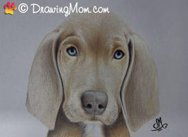 Drawing of Nica by DrawingMom