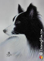 Drawing of Oreo by DrawingMom