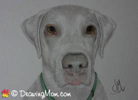 Drawing of Jake by DrawingMom