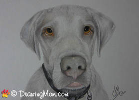 Drawing of Elvis by DrawingMom