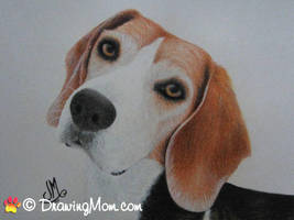 Drawing of Spartacus by DrawingMom