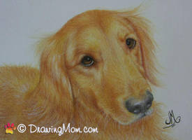 Drawing of Monty by DrawingMom