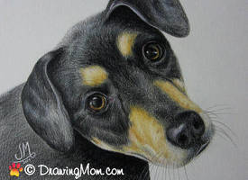 Drawing of Zoey by DrawingMom