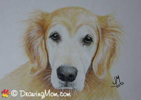 Drawing Champ by DrawingMom