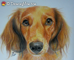Drawing of Ernie by DrawingMom
