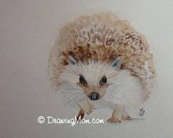 Hedgehog by DrawingMom