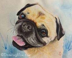 Bruce the Pug by DrawingMom