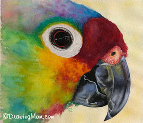 Parrot by DrawingMom