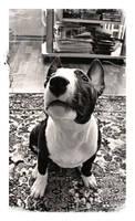 Marla the dog by Nedz-13